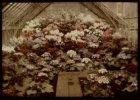 Interieur van een bloemenkas