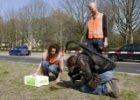 Wibautstraat, herinrichting en het uitzetten van 120.000 regenwormen