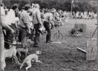 """Vondelpark. Rashondendag. Demonstratie van jagen op """"het haas"""""""