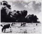 Verbranding chemisch afval aan de Diemerzeedijk