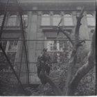 Artis, Plantage Kerklaan 40. Roofvogel in een volière voor gebouw De Volharding …