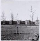 Erasmuspark; Bos en Lommer