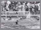 Waterpolotoernooi van vereniging de Dolfijn in het Sloterparkbad bij de Sloterpl…
