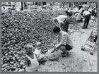 Toon Ahlmann uit Ammerzoden stort tachtig ton aardappelen op het Museumplein