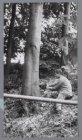 Het kappen van bomen in het Westerpark