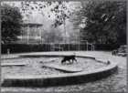 Vondelpark. Een hond in een zandbak. De gemeente wil de overlast van hondenpoep …