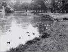 Afval in de vijver van het Vondelpark