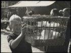 Noordermarkt, jongen met mand met duiven op vogelmarkt