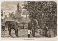 Het olifantenperk