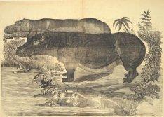 Twee nijlpaarden in het wild. Houtsnede