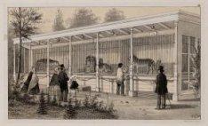 Natura Artis Magistra, Plantage Kerklaan 40. Roofdierengalerij rechterzijde.Tech…