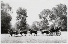 Schoonheidsconcours in het Vondelpark in verband met Paardendagen