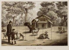 Het Moufflon-perk