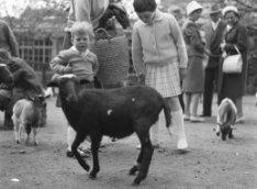 Kinderen spelen met dieren van de kinderboerderij van Artis, Plantage Kerklaan 4…