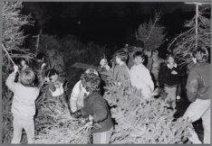 Kinderen zamelen kerstbomen in voor verbranding op het Museumplein