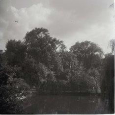 Artis, Plantage Kerklaan 40. Vijver omgeven door bomen
