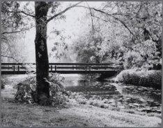 Beatrixpark. Waterpartij met brug in de zomer