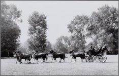 """Vondelpark. Schoonheidsconcours in het kader van de """"Paardendagen"""""""