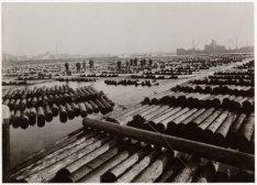 Een grote verzameling stammen in de zogenaamde balkenhaven