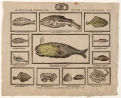 Ziet, kinders! op deez' print verscheidenheid van visch. Die ons de zee verschaf…