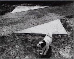 """Vondelpark. Hond bij het nieuwe kunstwerk """"verandering van richting, fase 1"""" van…"""