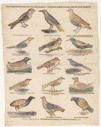 Dees vogeltjes staan hier haer soete stem te uyten tot groot vermaeck en vreugt …