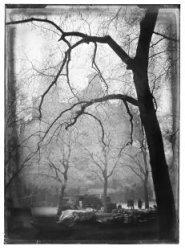 Westermarkt met berijpte bomen