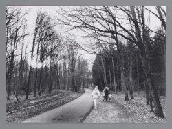 Amsterdamse Bos (gemeente Amstelveen) met wandelaars