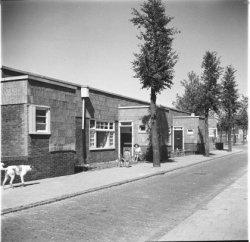 Chrysantenstraat