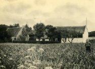 Boerderij 'De Witte Raaf' aan de Duinweg