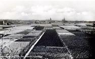 Bloembollenvelden bij Noordwijk