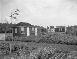 Huisjes op Ons Buiten 1957