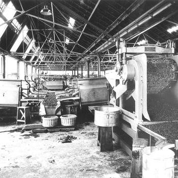 Kersensorteren en ontpitten bij Maatschappij De Betuwe, circa 1940