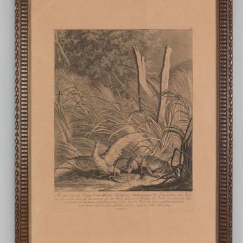 Een gans en een vos gevangen in een klem