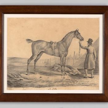 Paard met begeleider