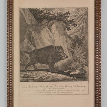 Een zwijn, geschoten door de hertog zu Würtenberg