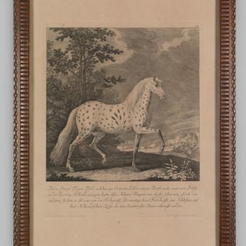 Een gevlekt paard