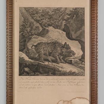 Een wild zwijn, geschoten in 1731