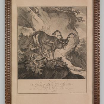 Een hert, geschoten door de hertog zu Würtenberg