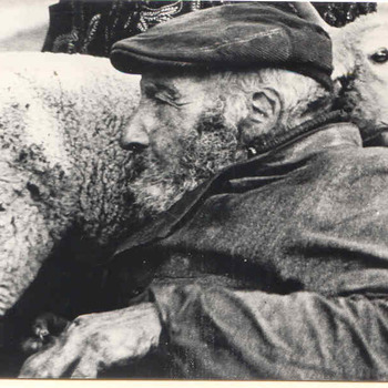 Schaapherder in de Loenermark