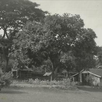 Joosten collectie: huis, tuin, boom