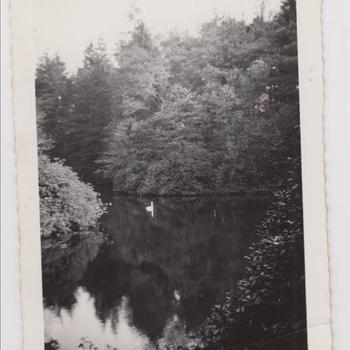 Foto van een vijver in een landschapspark in Engelse stijl, met zwaan