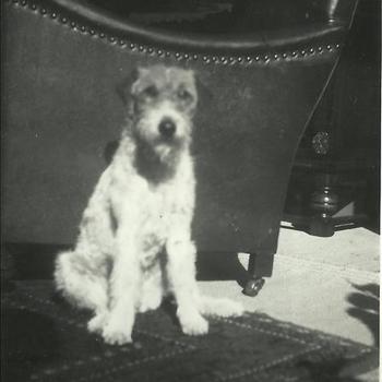 Joosten collectie: hond