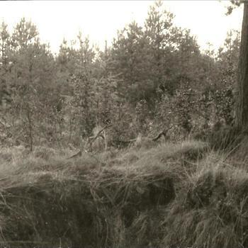 Reichswald Stellung