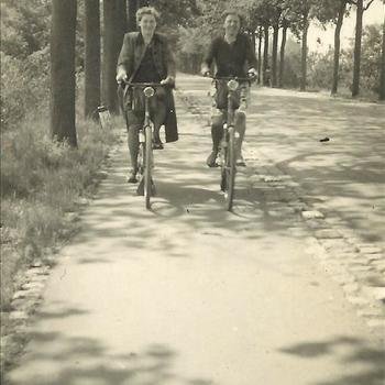 vrouw, fiets, fietspad, boom