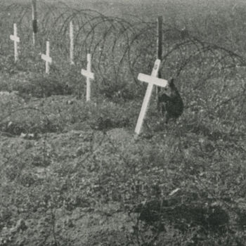 """Foto veldgraven. Tekst: """"Geallieerde soldatengraven in de gevechtszone van de Betuwe""""."""