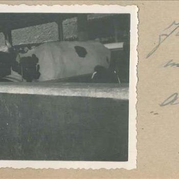 'Joep op Modelboerderij Arizona, Lambang' Nederlands-Indië 1949