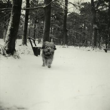 Joosten collectie: hond, sneeuw