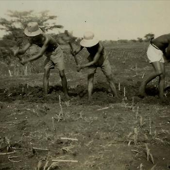 Ned. Indië, Tijgerbataljon: December 1946; werk op het land