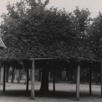 Lindeboom, Eersel, 1951